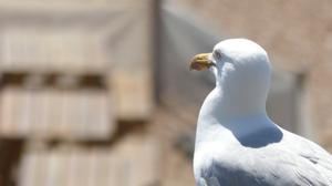 Seagull Brighton